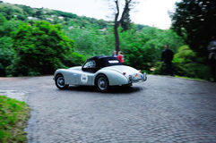 Silver Jaguar XK120 OTS during the 1000 Miglia, in Brescia Royalty Free Stock Image