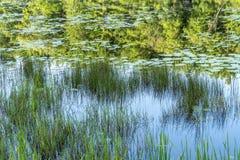 Silver Lake στη κομητεία του Sullivan Στοκ εικόνες με δικαίωμα ελεύθερης χρήσης