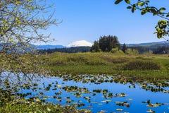 Silver Lake i Mt.St.Helens na horyzoncie Fotografia Stock