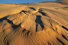 Silver Lake Sand Dunes Royalty Free Stock Image