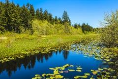 Silver Lake (Washington) Fotografia Stock