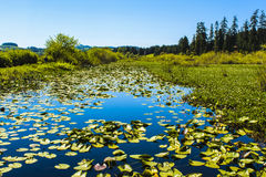 Silver Lake (Washington) Immagini Stock Libere da Diritti