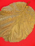 Silver leaf Royalty Free Stock Photo