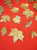 Silver leaves Royalty Free Stock Images