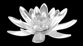 Silver lotus flower water lily. Isolated blooming chromed silver lotus flower. Water lily meaning purity, peaceful mind, calm and wisdom. PNG with transparent Royalty Free Stock Photos