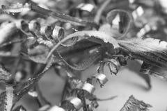 Silver Metal Scrap. Silver color metal shavings macro close-up Stock Image