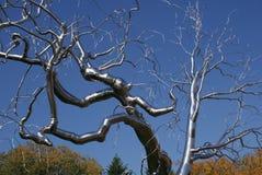Silver Metal Tree Stock Image