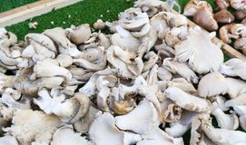 Silver mushrooms in a market in Paris France stock photo
