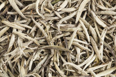 Silver needle white tea Royalty Free Stock Photo