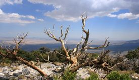 Silver Peak Summit. View of the high desert from Silver Peak, California Royalty Free Stock Photo