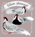 Silver Pheasants Royalty Free Stock Photos
