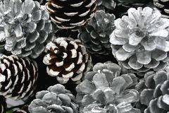 Silver pine cones decoration. Silver pine cones for home decor and decorations stock photo