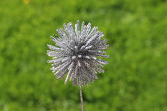 Silver plant decoration on blurry grass meadow. Silver star plant and flower decoration on a blurry grass meadow background Stock Photography