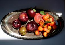 Silver platter of cherries, peaches, and plums in sunshine. Silver platter of cherries, peaches, and plums in sunlight, shot from above stock photography
