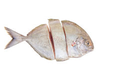 Silver Pomfret Fish I Royalty Free Stock Photography