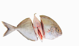 Silver Pomfret Fish II Stock Photography