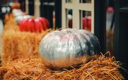 Silver pumpkin on the hay royalty free stock photography