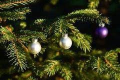 Silver and purple Balls on outdoor conifer Christmas Tree royalty free stock images