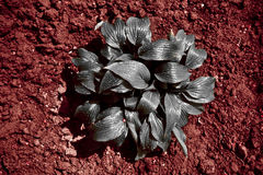 Silver and Red. Silver plant on bloody soil. Abstract vision of our Planet Royalty Free Stock Photography