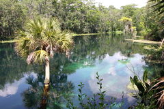 Silver River Florida. Taken in Silver Springs State Park in Florida, shows the light on the water with reflections Royalty Free Stock Photos