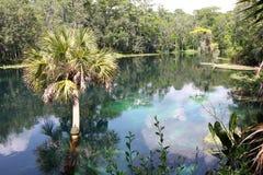 Silver River Florida Royalty Free Stock Photos
