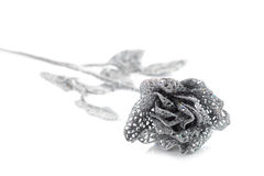 Silver rose Royalty Free Stock Photo