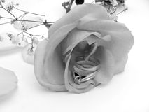 Silver rose. Monocrome rose with rings Royalty Free Stock Image