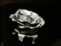 Silver rose Royalty Free Stock Images