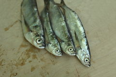Silver sabrefish. The freshly caught fish sabrefish Royalty Free Stock Photo