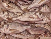 Silver sea bream close up. Natural marine background Stock Image