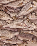 Silver sea bream close up. Natural marine background Royalty Free Stock Photography
