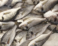 Silver sea breams for sale. At the central market Royalty Free Stock Photo