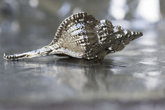Silver shell Royalty Free Stock Photography