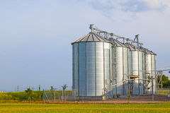 Silver silos in corn field Royalty Free Stock Photography