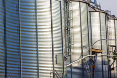 Silver silos in corn field Stock Photo