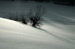 Silver snow landscape. Winter snow landscape Royalty Free Stock Photos