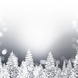 Silver Snowy Trees Royalty Free Stock Images