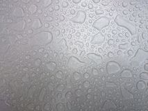 silver spider 免版税库存图片