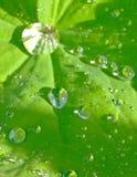 silver spider Стоковые Изображения RF