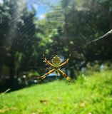 Silver Spider In A Sunny Day At The Park Royalty Free Stock Photo