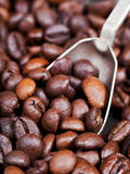Silver spoon scoops roasted coffee beans Royalty Free Stock Photos