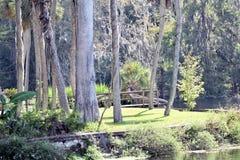 Silver- SpringsNationalpark-Florida-Gärten Stockfotos