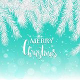 Silver spruce branches on a blue background. Christmas card. Stock Photography