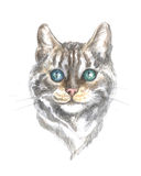 Silver tabby bengal cat. Image of a thoroughbred  bengal  cat. Watercolor painting Stock Photo