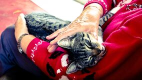 Silver Tabby Cat Sleeping on Person Hand Stock Photos