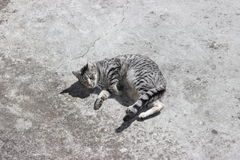 Silver tabby cat. A silver tabby cat sprawled across matching silvery grey concrete Stock Photography