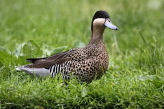 Silver teal Stock Photos