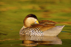 Silver Teal Royalty Free Stock Photography