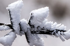 The silver thaw. On the barbed wire in the sailimu lake of Xinjiang, China stock image