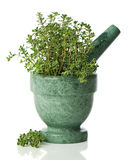 Silver Thyme Stock Photo